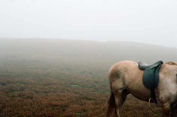TIFF 2011 - Wuthering Heights - Andrea Arnold