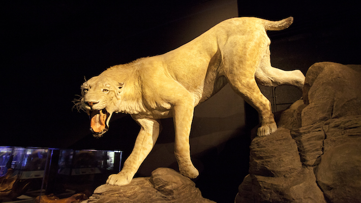 museum-tiger