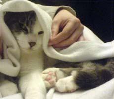 Gordon the cat, hiding under a towel