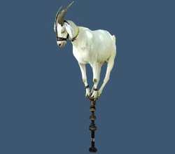 tojam-goat