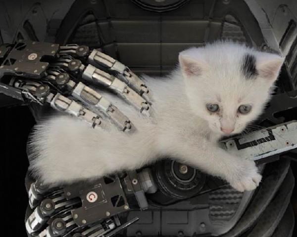 talos-principle-kitten