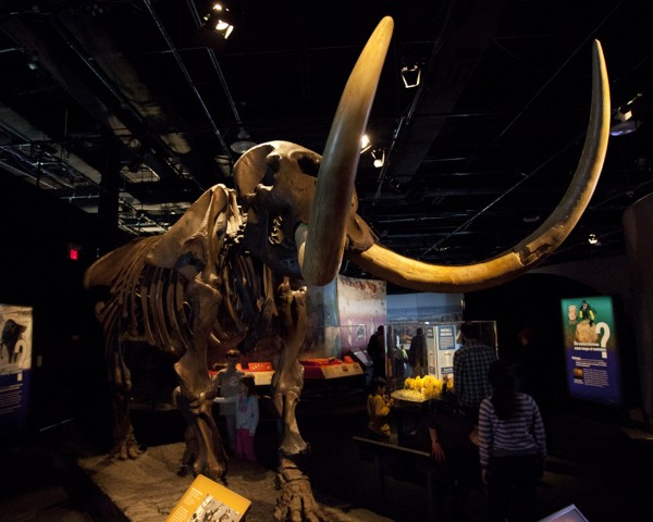 mammoth-skeleton
