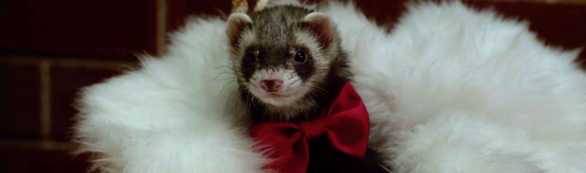 santas-little-ferrets-image-01