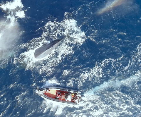 A scene from The Loneliest Whale: The Search for 52